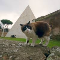 A cat stands next to the Pyramid of Cestius in Rome, Wednesday. Rome's only surviving pyramid from ancient times is getting fresh visibility. After a Japanese clothing magnate paid for a cleanup, archaeologists are eager to show off the monument, constructed some 2,000 years ago as the burial tomb for a Roman praetor, or magistrate, named Caius Cestius. | AP