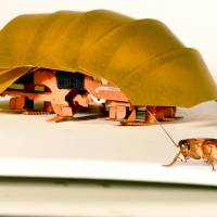 The Compressible Robot with Articulated Mechanisms (CRAM) sits beside a real cockroach. | POLYPEDAL LAB UC BERKELEY/TOM LIBBY, KAUSHIK JAYARAM AND PAULINE JENNINGS VIA AP