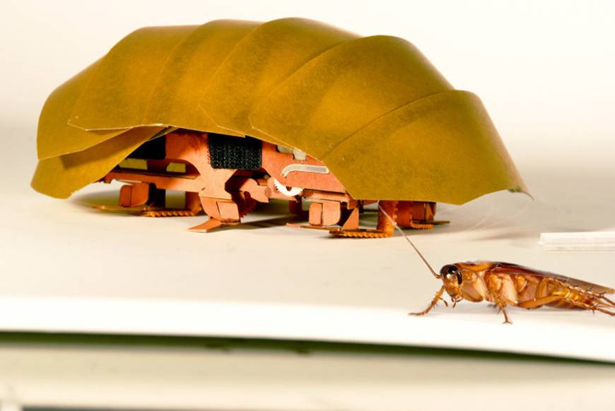 Repulsive maybe but cheap, roach-like robots being groomed for disasters