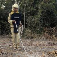 Handler Ok Chann guides mine-sniffing African rat Cletus across a suspected mine field in Trach, Cambodia, on Feb. 19. | AP