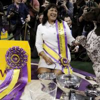 Handler Valerie Nunez Atkinson poses with CJ, a German shorthaired pointer from the Sporting Group, after they won Best in Show at the Westminster Kennel Club Dog show at Madison Square Garden in New York on Tuesday.  | REUTERS