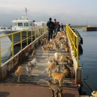 Cats gather on Aoshima Island, also known as Cat Island, in Ehime Prefecture in this handout photo taken on March 20, 2015. | AFP-JIJI