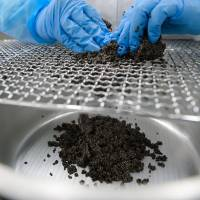 An employee processes sturgeon eggs at the Miyazaki Prefectural Fisheries Research Institute caviar plant in Kobayashi, Miyazaki Prefecture, on Jan. 25. | BLOOMBERG