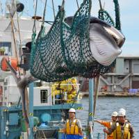 "Documentary 'Behind ""The Cove""' aims to promote multisided understanding of Japanese whaling"