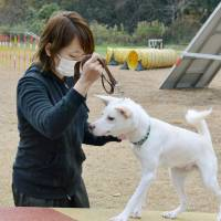 Sana Okamoto participates in a rescue dog training course with Monaka, a formerly abandoned mixed-breed, in Itano, Tokushima Prefecture, in December. | KYODO
