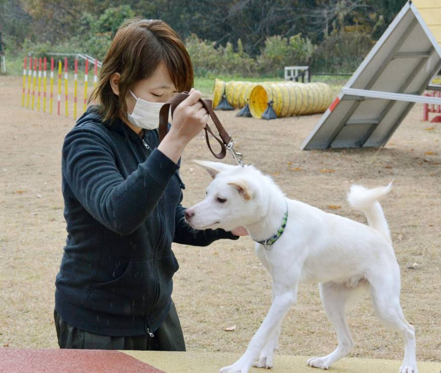 Tokushima group trains abandoned dogs for rescue roles