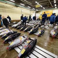 Tuna are laid out for inspection prior to the first auction of the year at the Tsukiji fish market in Tokyo on Jan. 5. | BLOOMBERG