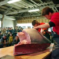 Japan weighs annual catch quota for endangered Pacific bluefin tuna