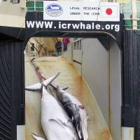 Sea Shepherd says it can't find Japan's whaling fleet