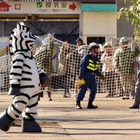 A zookeeper dressed as a zebra takes part in a drill to practice what to do in the event of an animal escape at the Ueno Zoo in Tokyo on Tuesday. | AFP-JIJI