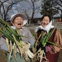 Current crop: Eiko Kanno (left) and Yoshiko Kanno, evacuees from the Fukushima No. 1 nuclear plant disaster, show off harvested green onions near a temporary housing complex in Date, Fukushima Prefecture. The two women are featured in the film 'Moms of Iitate — Together with Soil,' which is directed by Mizue Furui. | COURTESY OF MIZUE FURUI/KYODO