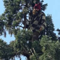 Tree climber disrupts Seattle traffic
