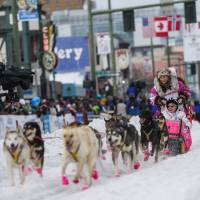 Alaskan musher DeeDee Jonrowe and her team leave the ceremonial start of the Iditarod Trail Sled Dog Race to begin the near 1,000-mile (1,600-km) journey through Alaska's frigid wilderness in downtown Anchorage, Alaska, on Saturday. | REUTERS