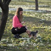A girl takes pictures of her dog back-dropped by freshly sprung snowdrops and other spring flowers during an unseasonably warm winter Feb. 16 in Bucharest. Earth got so hot last month that federal scientists struggled to find words, describing temperatures as 'astronomical,' 'staggering' and 'strange.' They warned that the climate may have moved into a new and hotter neighborhood. | AP