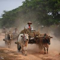 Myanmar farmers ride ox carts along the Yangon to Naypyitaw highway on March 14. | AFP-JIJI