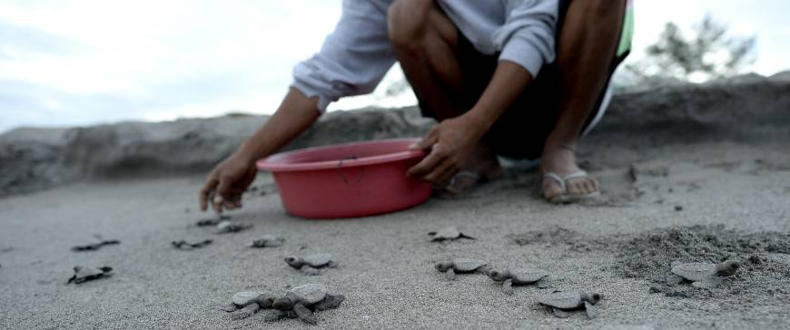 Endangered sea turtles get a helping hand rather than the soup pot in the Philippines