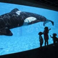 Young children get a close-up view of an Orca killer whale during a visit to the animal theme park SeaWorld in San Diego, California, in this file photo from March 19, 2014. | REUTERS