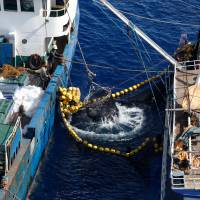 Massive illegal tuna fishing in Pacific, study finds