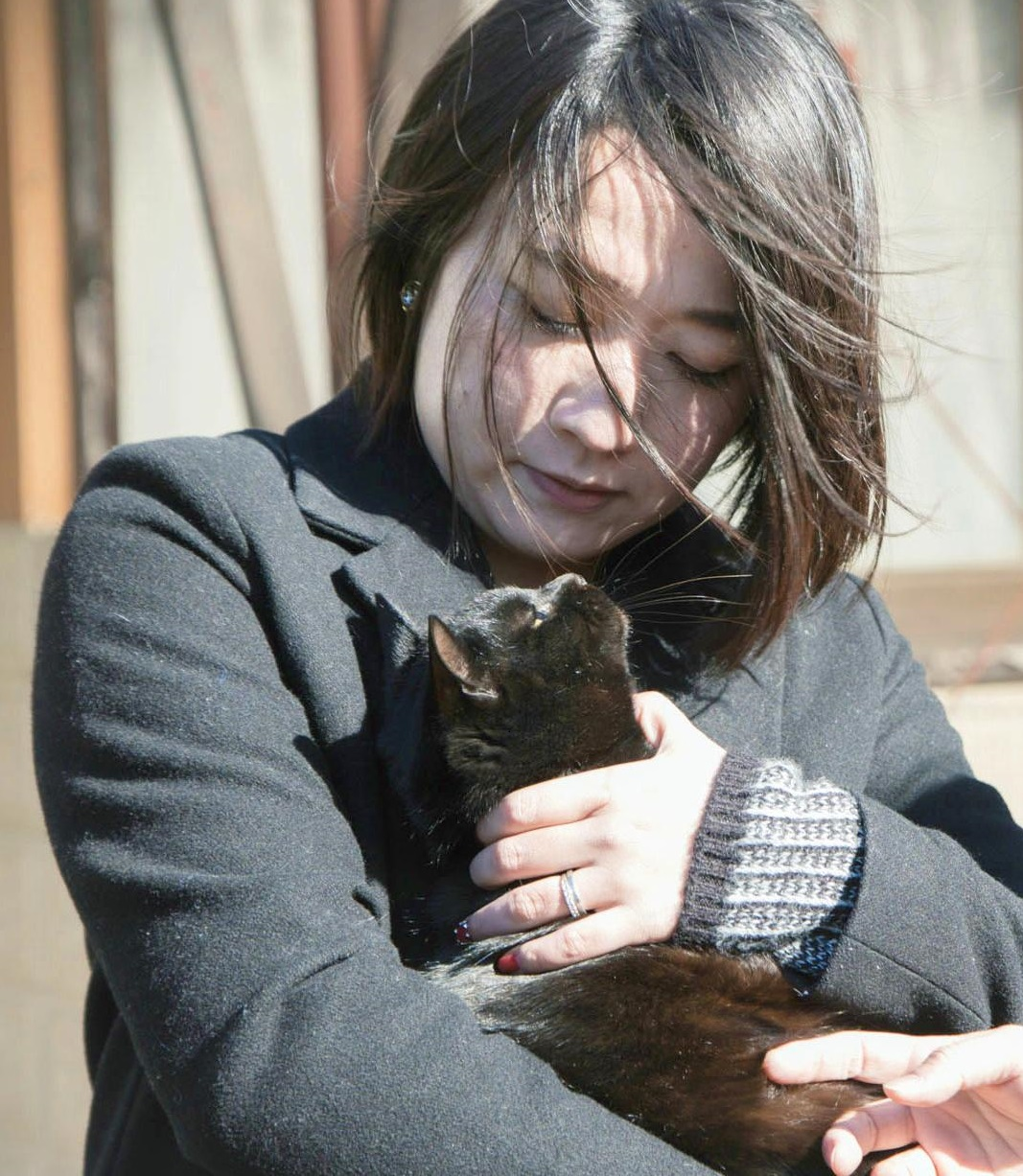aichi girl s essay on rampant cheap killing of stray cats spurs writer makoto tozuka holds a stray cat in toyohashi aichi prefecture in