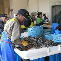 Fukushima's fishing industry struggles amid safety fears, catch restrictions