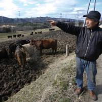 For rancher near Fukushima, tending herd is act of defiance