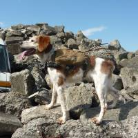 Tohoku team touts Robo-Dog technology in disaster rescues