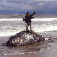 Prize for photo of man standing on beached whale revoked following backlash