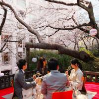Pink clouds: The Sakura Tower's Steak House Katsura will open a balcony under their cherry trees until April 10.