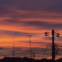 Knowledge is power: Navigating the household electricity market after deregulation