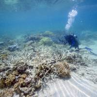 Barrier Reef at greater risk than thought: study