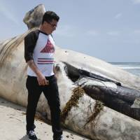 Whale on California beach will be cut up, sent to landfill