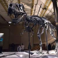 Dinosaurs were already on the way out when asteroid issued coup de grace: study