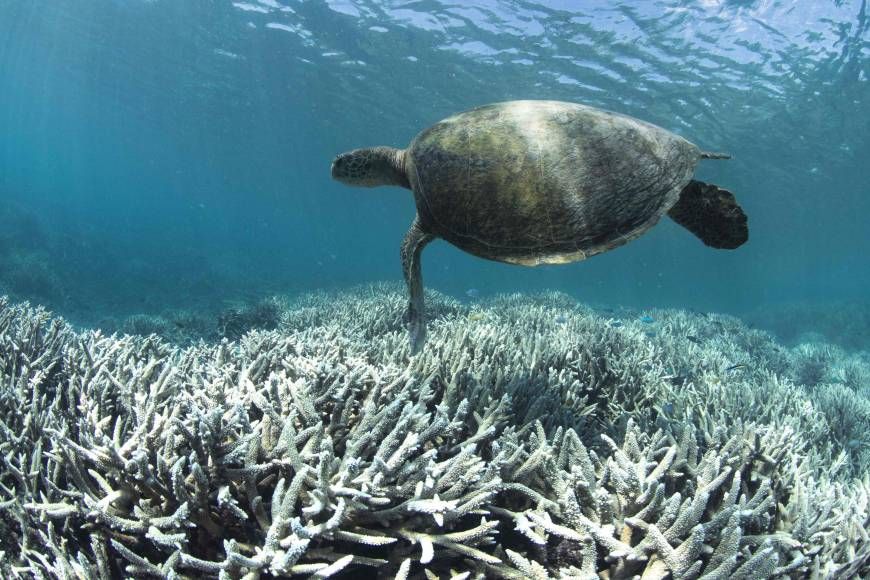 Coral bleaching hits 93% of Australia's Great Barrier Reef