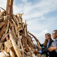 Cameroon torches 2,000 tusks in one of Africa's biggest burnings of poached wildlife goods