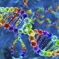 Japanese researchers have completed a whole-genome analysis of liver cancer patients in the largest genomic study ever targeting single-organ cancers. | ISTOCK