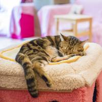 Authorities discover unhygienic conditions at Tokyo cat cafe, order temporary closure