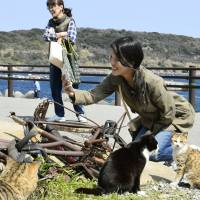 Cat island draws tourists; residents regret loss of tranquility