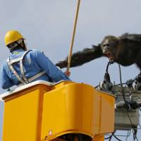 An escaped chimpanzee named Chacha lashes out at a rescue worker in Sendai following his escape from Yagiyama Zoological Park on Thursday afternoon. The chimp was recaptured after about two hours. | KYODO