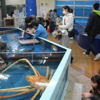 Friendly employees have visitors flocking to Takeshima Aquarium in Aichi