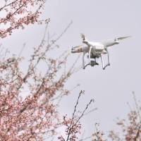 A drone films cherry blossoms in Senboku, Akita Prefecture, on Wednesday. | KYODO
