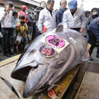 A bluefin tuna is put on display in front of a sushi restaurant near the Tsukiji fish market in Tokyo after the year's celebratory first auction. | AP