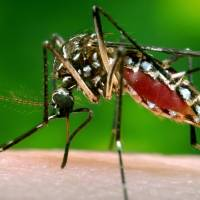 New study estimates transmission risk of Zika virus in Japan at 16% for rest of year