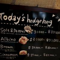 A board shows a selection of hedgehogs for sale at the new animal-themed cafe, which has 20 to 30 hedgehogs of different varieties. Customers have been lining up to play with the prickly mammals, which have long been sold in Japan as pets. The cafe's name Harry alludes to the Japanese word for hedgehog, harinezumi.   REUTERS