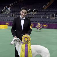 Handler Shota Hirai poses with Lucy after winning second place at the 140th Westminster dog show in New York in February.   COURTESY OF KEIZO KAIDA
