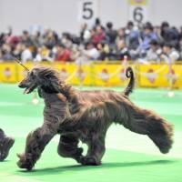 Heel! A ruff guide to Japan's top dogs