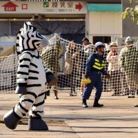 Trial and error: A zoo keeper dressed as a zebra takes part in a drill to practice what to do in the event of an animal escape at Ueno Zoo in Tokyo. An actual zebra escape in Aichi and Gifu prefectures resulted in the death of the animal, which proves a valuable lesson: real-life experience matters. | AFP-JIJI