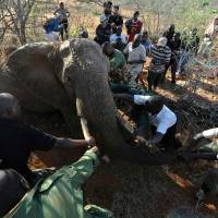 Tracking elephants as a new railway cuts Kenya