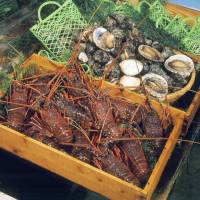 <i>Ise-ebi</i> Japanese spiny lobster and abalone from the Shima coast. The peak season for Ise-ebi is winter, while the peak for abalone is late spring through summer. | ISE PRESS CENTER