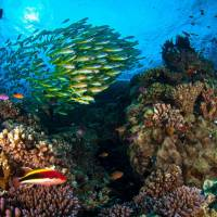 Scientists warned on May 19 that Australia's Great Barrier Reef could be beyond saving in five years as climate change ravages the World Heritage site. | AFP-JIJI