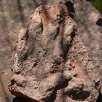 Well-preserved, 230 million-year-old dinosaur footprint turns up in north Spain